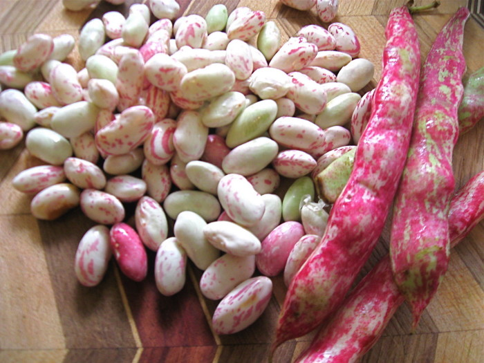 Last year's cranberry beans